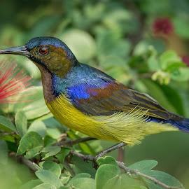 Sun Lovers by Zuraimi Arsad - Animals Birds ( bird, details, flowers, close up, rainbow, sun, colours )