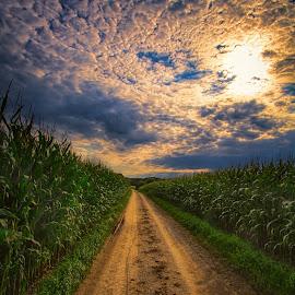 A path between two corn fields by Stefan Kierek - Landscapes Prairies, Meadows & Fields ( field, way, landscape, patch, corn field )