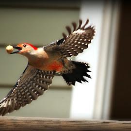 by Connie Brewer - Animals Birds (  )