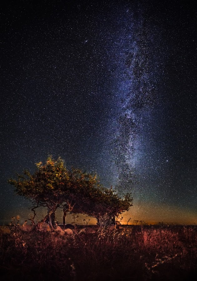 Trees under the stars by Jörgen Tannerstedt - Landscapes Starscapes ( alvar plains, stars, nightscape, öland, milky way, galaxy )