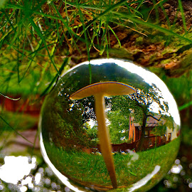 Backyard Bubble with iPhone by Tyrell Heaton - Instagram & Mobile iPhone ( mushroom, bubble, iphone )