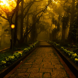 Mystic Morning by Sreejith Babu - City,  Street & Park  City Parks ( mystic, bangalore, mountain, fog, morning, karnataka )