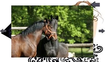 Screenshot of Horses for shopping queen