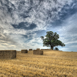 Harvest time at Vesterborg by Kim  Schou - Landscapes Prairies, Meadows & Fields ( kim schou, hdr, oak, vesterborg, fields )
