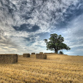 Harvest time at Vesterborg by Kim  Schou - Landscapes Prairies, Meadows & Fields ( kim schou, hdr, oak, vesterborg, fields,  )