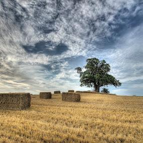 Harvest time at Vesterborg by Kim  Schou - Landscapes Prairies, Meadows & Fields ( kim schou, hdr, oak, vesterborg, fields,  )