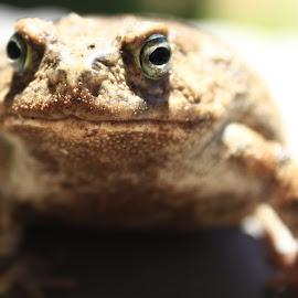 by Riana Sadler - Animals Amphibians