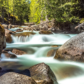 Coffe Creek by Stephen Bridger - Nature Up Close Water ( canada, outdoor photography, coffee creek, waterfall, travel, nature, creek, outdoors, kootenays, nature photography, kaslo, bc, travel photography, british columbia )