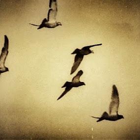 Enjoy to fly by Nat Bolfan-Stosic - Uncategorized All Uncategorized ( fly, happy, enjoy, birds, flock )