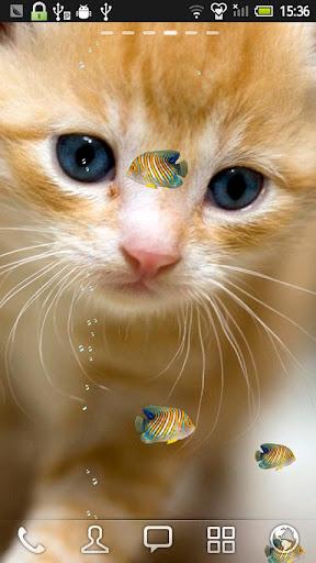 ニシキヤッコと子猫★LIVE壁紙
