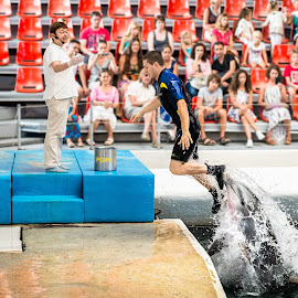 How to exit pool in style by Cosmin Stahie - News & Events Entertainment ( training, dolphin, delfinarium, journalism, pool, lift, exploitation, show, man, animal )