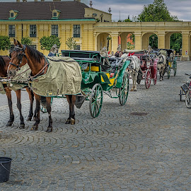 by Izzy Kapetanovic - Transportation Other ( vienna, tricycle, horses, horse carriage, austria, bicycle, schonbrunn palace )