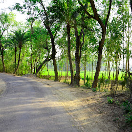 by Shafiqul Shiplu - Landscapes Travel ( trees, roads )