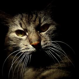 *** by Jurijs Ratanins - Instagram & Mobile Other ( look, mobilography, cat, pet, portrait, animal )