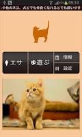 Screenshot of 【無料育成】ポケット哺乳類(ネコ)~アメショー~