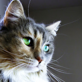 Squeaky by Trish Hamme - Animals - Cats Portraits