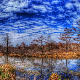 Spring is coming by Zeralda La Grange - Instagram & Mobile iPhone ( #landscape, #lake, #nature, #trees, #iphone, #water, #hdr )