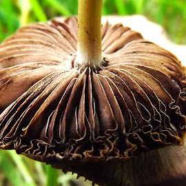 Gills by Steve Frawley - Nature Up Close Mushrooms & Fungi