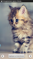 Screenshot of Beautiful Cat Wallpapers