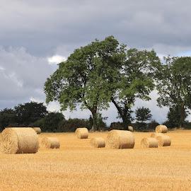 Harvest time by Ann Chapman - Landscapes Prairies, Meadows & Fields ( field, harvest, landscape,  )