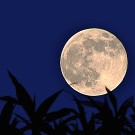 Super Moon by Rakesh Syal - News & Events World Events