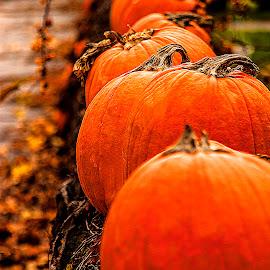 Autumn Colours by Nancy Senchak - Nature Up Close Gardens & Produce