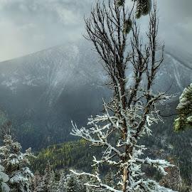 by Michael Richmond - Landscapes Mountains & Hills
