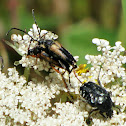 Beetles mating