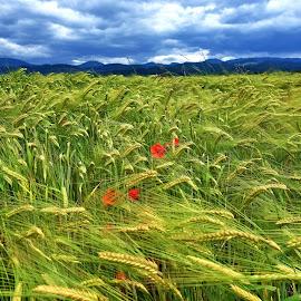 by Bernarda Bizjak - Landscapes Prairies, Meadows & Fields