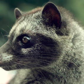 by Didik Baen - Animals Other Mammals