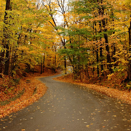 Its fall in heaven by Siju Thomas - Landscapes Mountains & Hills ( fall colors, road trip, trees, yellow flower, fall, color, colorful, nature )