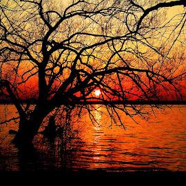 Beauty Enhanced by Jim Greene - Landscapes Sunsets & Sunrises ( water, sunset, trees, lake )