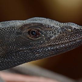 Lizard head by Svetlana Zubakhina - Animals Reptiles (  )