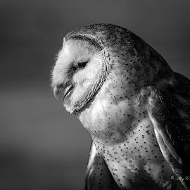 by Alison Grünewald - Animals Birds (  )