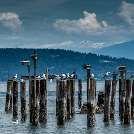 anacortes wa by Tariq Aldighaither - Landscapes Beaches ( harbor, seattle, anacortes, wa )