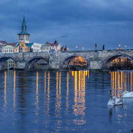 Charles Bridge by Vladimir Vocelka - City,  Street & Park  Historic Districts ( vltava, czech republic, the blue hour, prague, charles bridge )