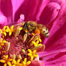 by Kat Yates - Nature Up Close Gardens & Produce
