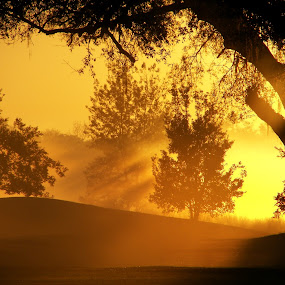 Sunrise by Raymond Earl Eckert - Landscapes Forests