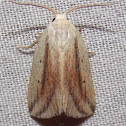 Feeble Grass Moth