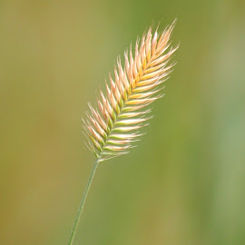 Summer's Splendor by Sherri Woodbridge - Nature Up Close Leaves & Grasses (  )