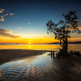 Solitaire by Ade Noverzan - Landscapes Beaches ( tree, padang, sunset, beach, dusk )