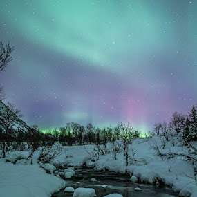 Aurora and creek by Benny Høynes - Landscapes Forests ( water, auroras, stars, snow, creek, norway )