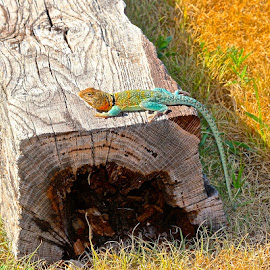 Lizard On A Log by Kathy Suttles - Animals Reptiles