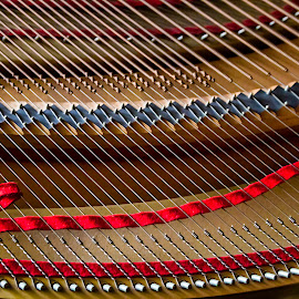 Music Lines by Karen Celella - Artistic Objects Musical Instruments ( music, harp, piano, focus stacking, lines, strings, straight lines, vertical lines, pwc )