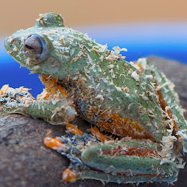 dirty by Ajar Setiadi - Animals Amphibians