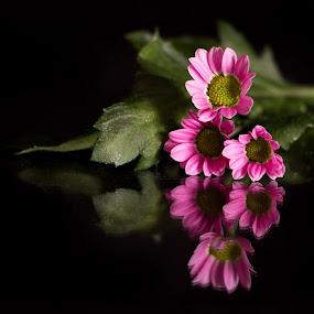 by Jimi Neilson - Flowers Flower Arangements