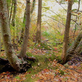 Gentle Woods by Sandie Lawler - Novices Only Landscapes ( woods )