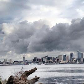 Across the Bay by Tara Bauman - City,  Street & Park  Skylines (  )