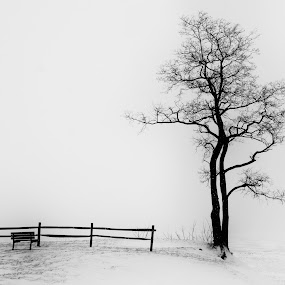 Where did everybody go.... by Christopher Gray - Black & White Landscapes ( beach tree,  )