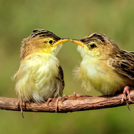 Kissed You by Roy Husada - Animals Birds